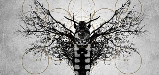 moths_circle_flight_My_Entropy_cover
